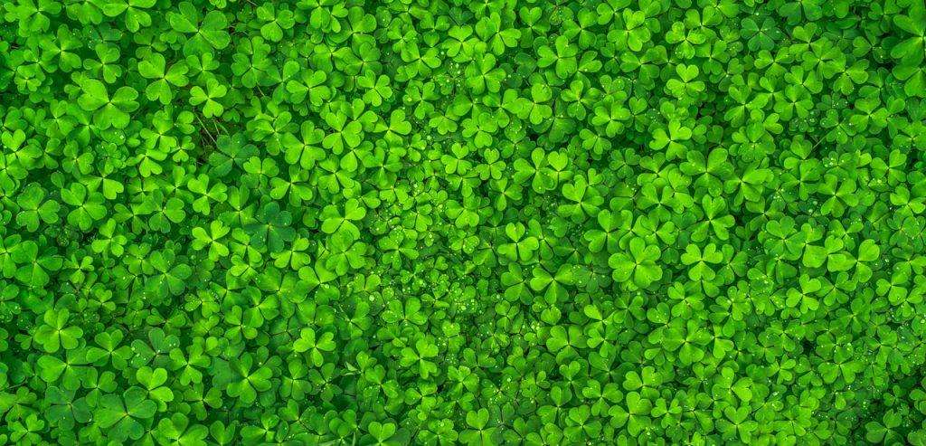 couleur verte vert