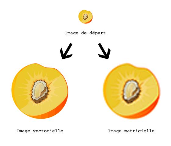 comprendre les formats d'images matricielles et vectorielles